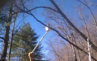 man in bucket truck cutting tree