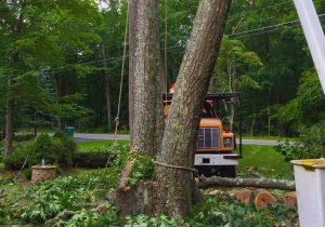 trees being cut down with orange truck behind
