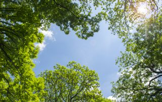 4 Steps For Better Tree Health 10