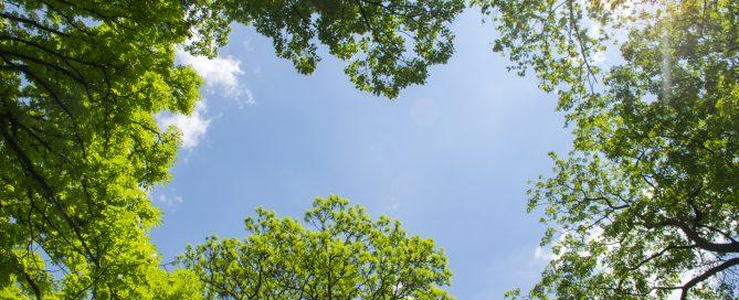 4 Steps For Better Tree Health 7