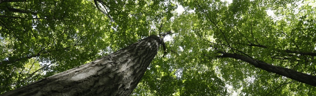 4 Steps For Better Tree Health 1