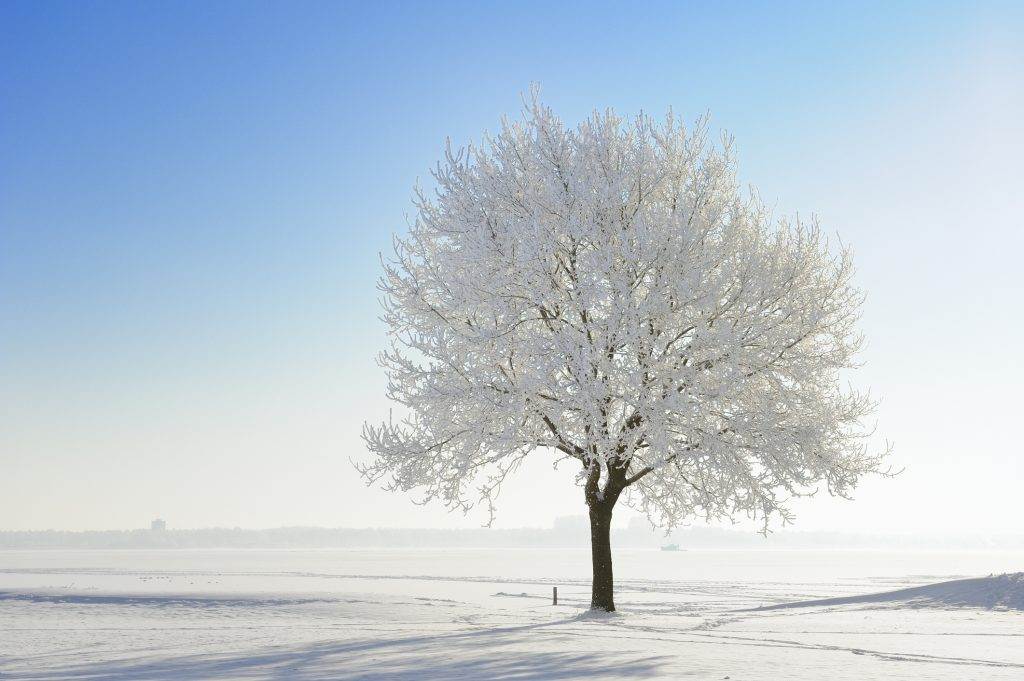 Protecting Your Trees for Winter 4