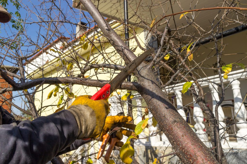 Proper Tree Care Throughout The Fall 4