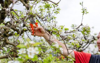 Why You Should Be Looking After Your Fruit Trees Right Now 6