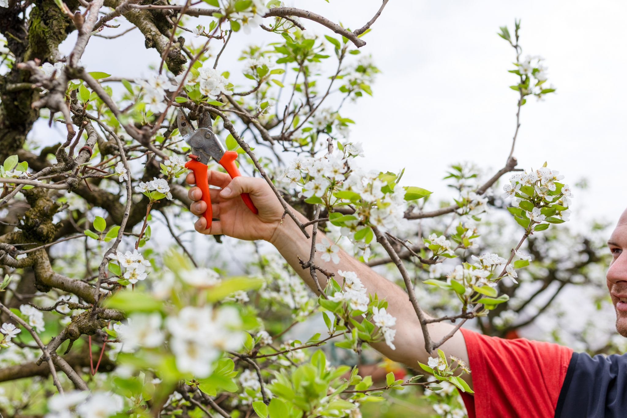 Why You Should Be Looking After Your Fruit Trees Right Now 1