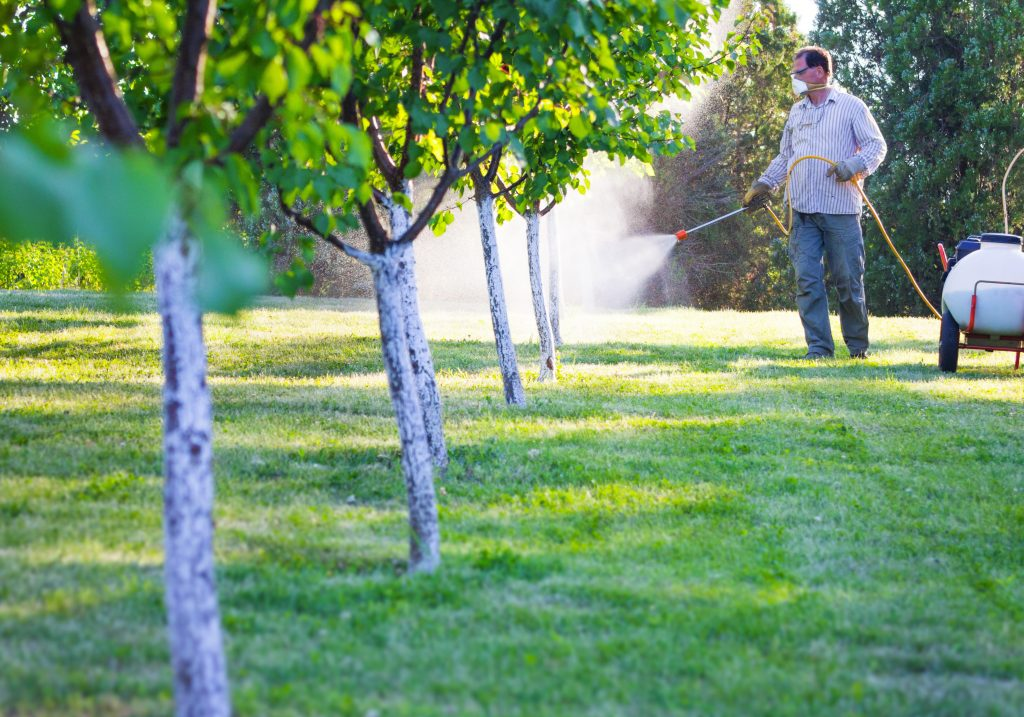 Summer Tree Care - What You Can Do 5