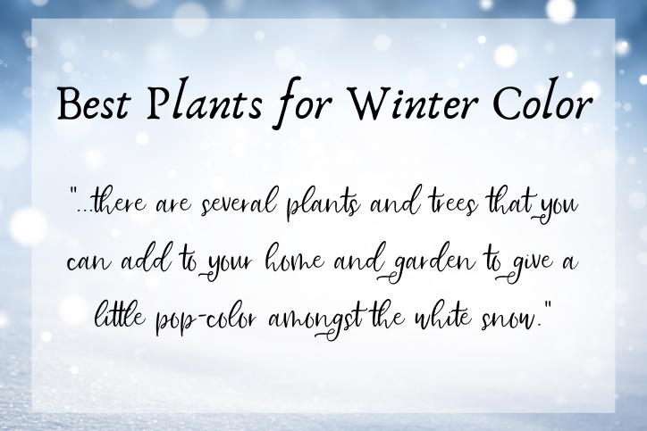 Best Plants for Winter Color 1