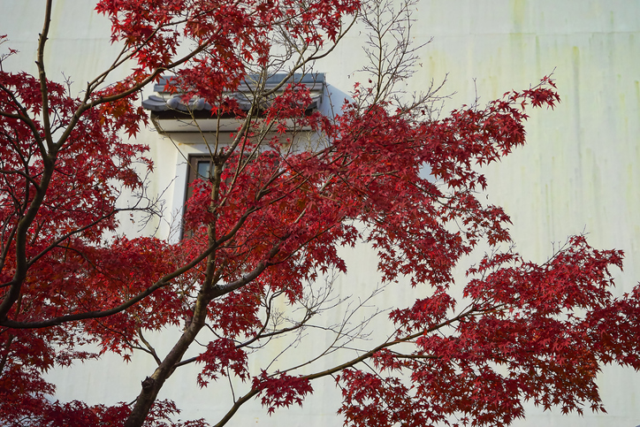 Trees for the best winter color: