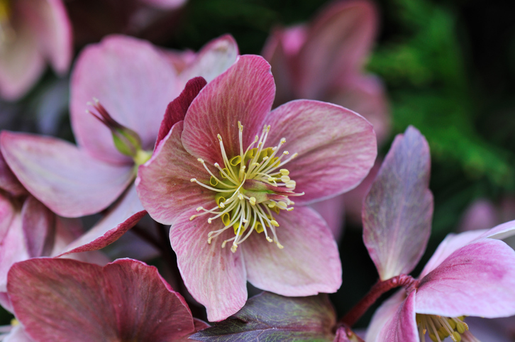 Flowers that can bloom in the winter: