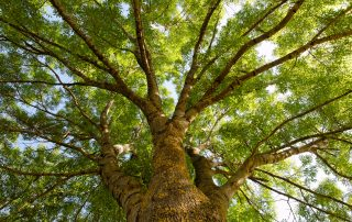What Is The Trillion Trees Act? 4