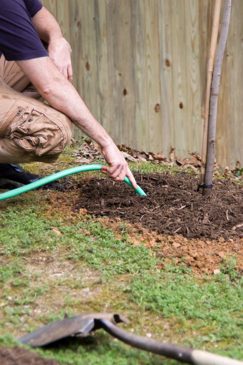 Caring for a Newly Planted Tree 1